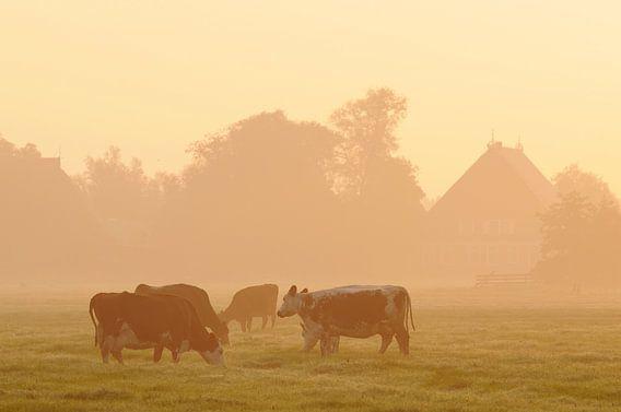 Koeien in weiland (Friesland) van Tjitte Jan Hogeterp