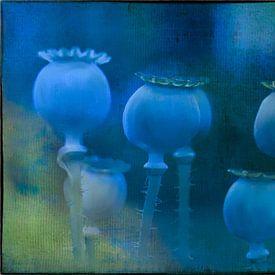 Blauwe klaproos van Christine Nöhmeier