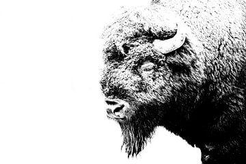 Bizon, Amarican bison van Corinne Cornelissen-Megens