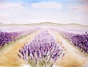 lavenderfiellds
