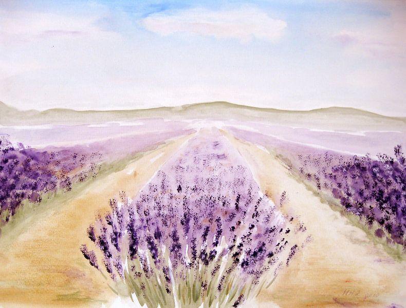 lavenderfiellds van M.A. Ziehr