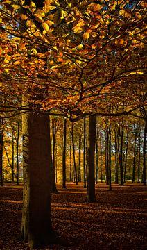Begin van de herfst in het bos van Marjolijn van den Berg