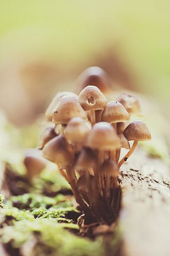 Bosje vintage paddenstoelen