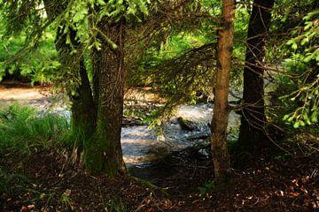 Kleine stroom in het bos van Claudia Evans