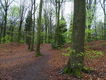 Bos in het voorjaar  van Tineke Laverman