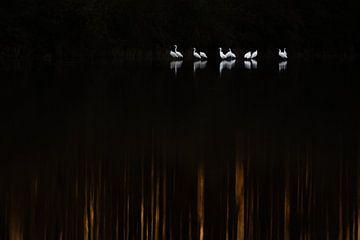 Lichtpunkte im Dunkeln von Danny Slijfer Natuurfotografie