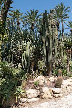 Palmbomen van Merel Taalman