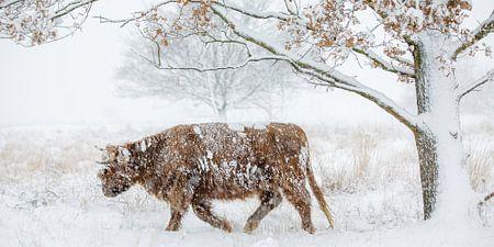 Door de sneeuw heen van Nando Harmsen