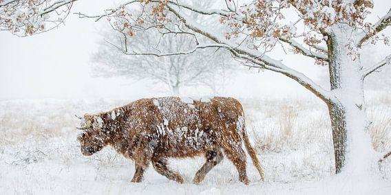 Door de sneeuw heen