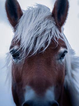 Het paard van Maria Almyra