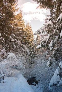 Wald und Bach von Mariette Alders