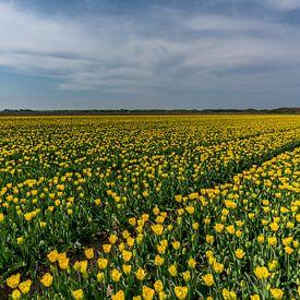 Tulipes sur Texel - Code jaune sur Texel360Fotografie Richard Heerschap