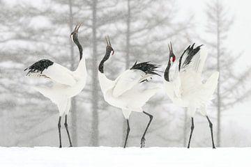 Grues japonaises dans la neige (bataille sonore) sur Harry Eggens