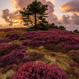 Heide bij Bergen 7 van Peter Heins