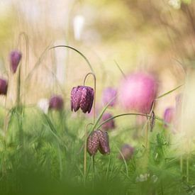 Une prairie de fleurs sur Birgitte Bergman