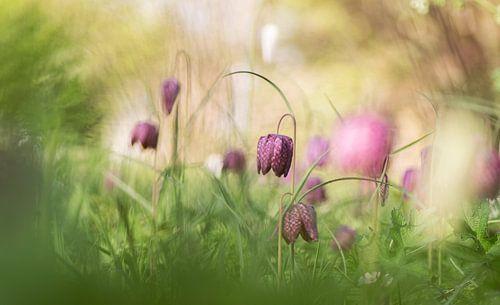 Een bloemenweitje