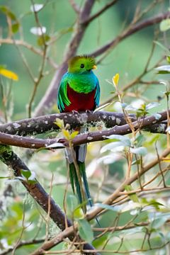 Quetzal von Merijn Loch