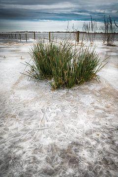 Gras in het ijs