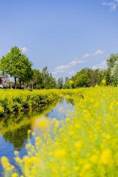 Der gelbe Bach in Nieuwstadt (limburg) von Debbie Kanders