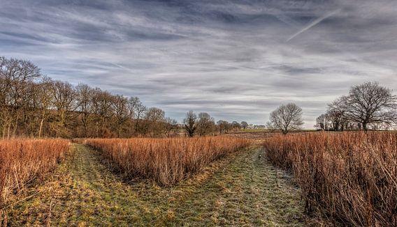 Heidelandschap bij Bocholtz