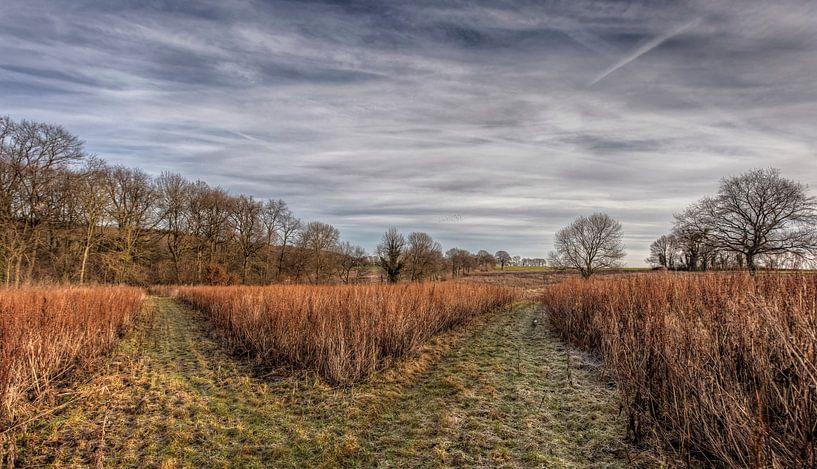 Heidelandschap bij Bocholtz van John Kreukniet