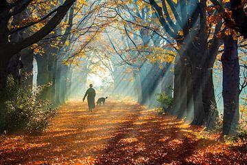 Journée d'automne brumeuse sur Niels  de Vries