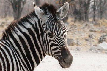 Zebra, natuur in zwart wit van Erna Haarsma-Hoogterp