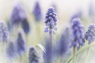 Blumen Teil 79 von Tania Perneel