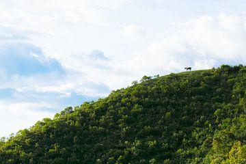 Eenzaam paard op een heuvelrug van