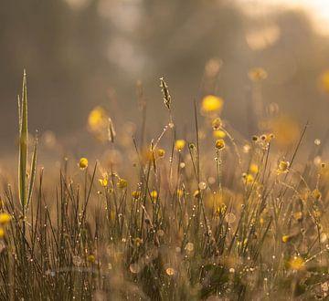 prairie ensoleillée sur Tania Perneel
