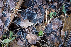 Bevroren herfstbladeren van