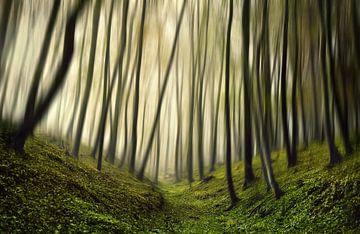 Lauf, Forest, lauf, Samanta Krivec von 1x