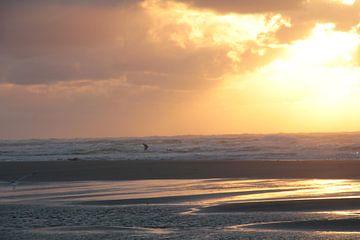 Ameland surfer von John ten Hoeve