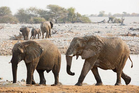 De Afrikaanse terugweg na verfrissing