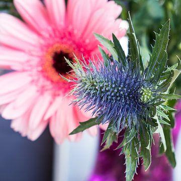 Kombination von Purpurdistel für rosa Blüten aus der Nähe von Idema Media