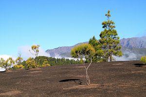 De Caldera de la Taburiente op La Palma