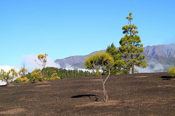 De Caldera de la Taburiente op La Palma van Jolanta Mayerberg