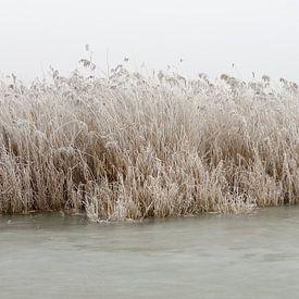 IJs, riet, lucht (2) van Merijn van der Vliet