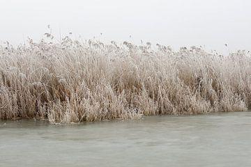 IJs, riet, lucht (2) von Merijn van der Vliet