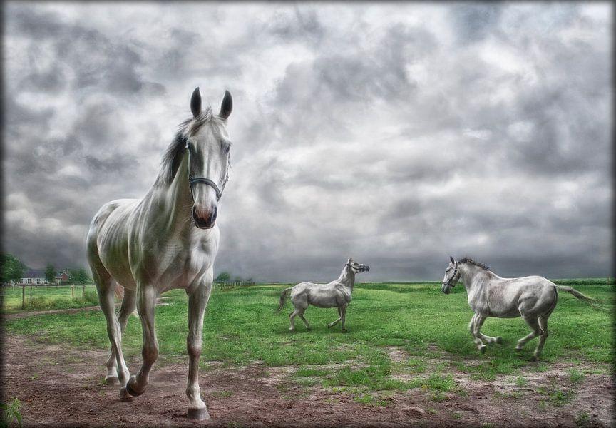Witte paarden in Hollands landschap van Marcel van Balken