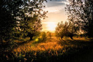 Sonnenuntergang im Goudse Hout // Groene Hart, Niederlande von PHOTORIK