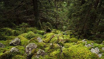 Überall im Norden von Tim Newnham Photography