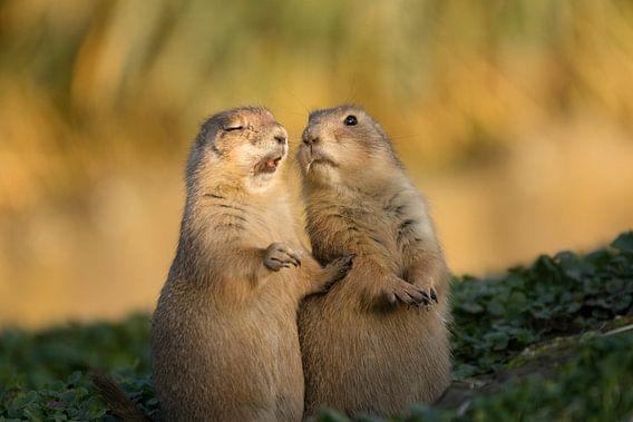 Prairiehondjes blooper van Jeanine Verbraak