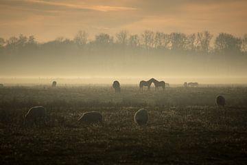 een zonnige, maar mistige namiddag op de Delleboersterheide. van Thea De Jong