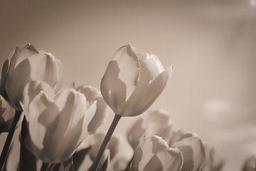 Tulpenveld van Wendy Tellier - Vastenhouw