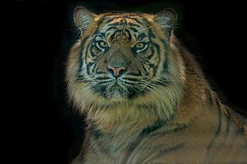 Tiger, einen Porträt von Gert Hilbink