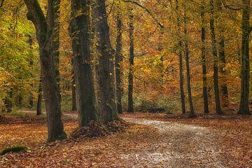 Bochtige weg met herfstkleuren van Cor de Hamer