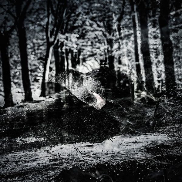 Dunkelschwarzer Schwan von Freddy Hoevers