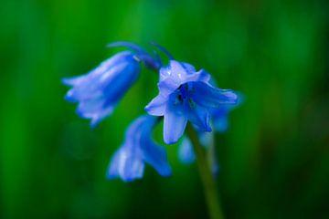 blauwe bloemen van Anita van Gendt