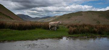 Schaap met haar lam in de bergen van het Lake District van Anges van der Logt